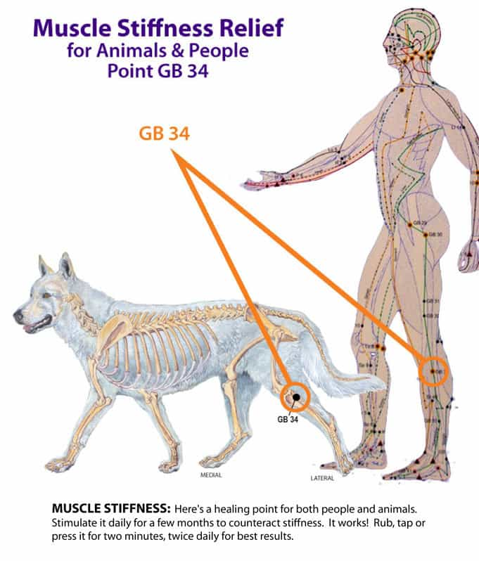Dog Owners Guide Vaccination Chart 2015 | Home Design Ideas